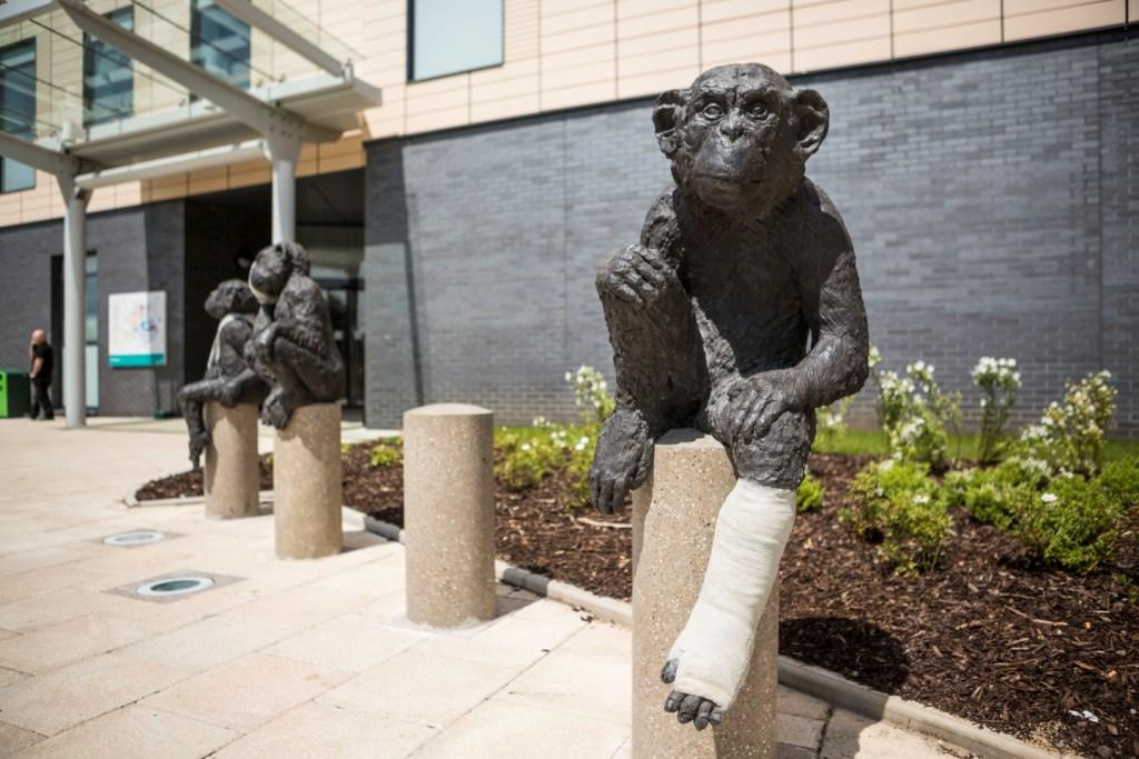 Laura Ford monkey sculptures at Southmead Hospital Bristol